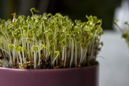 benefits of indoor gardening